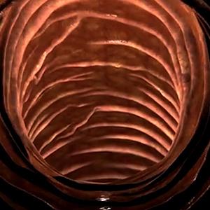 duncan-poulton-tunnel_thumbnail